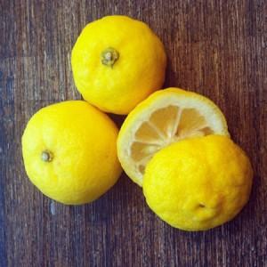 """Yuzu ou """"Citronnier du Japon"""" Citrus junos"""