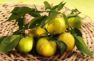 Le yuzu bio : un agrume venu d'Asie